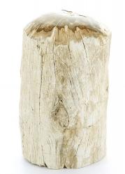 Versteinertes Holz aus Madagaskar