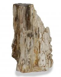 Versteinertes Holz, Baumstamm aus Indonesien, ca. 20,9 Kg, ca. 45 cm